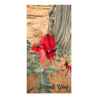 Thank You photo card - Sturt's Desert Pea