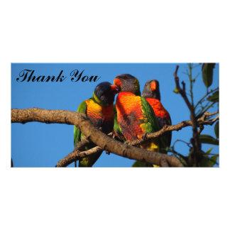 Thank You photo card with Rainbow Lorikeets