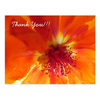 Thank You Postcard with orange flower
