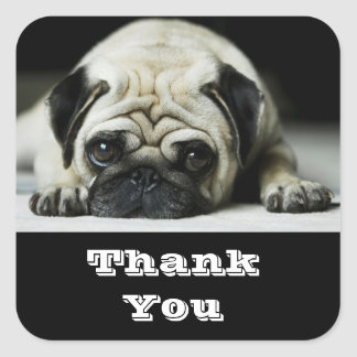 Thank You Pug Puppy  Dog Greetings Sticker