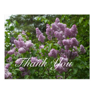 Thank You-Purple Lilac Bush Postcard