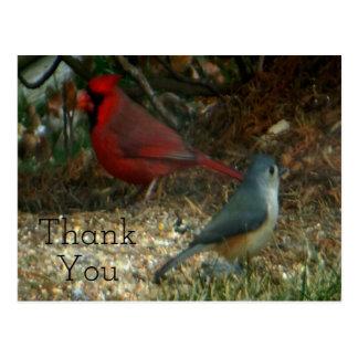 Thank You Red Cardinal Titmouse Postcard