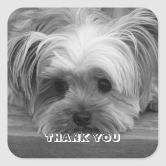 Thank You Yorkshire Terrier Puppy Dog  Sticker