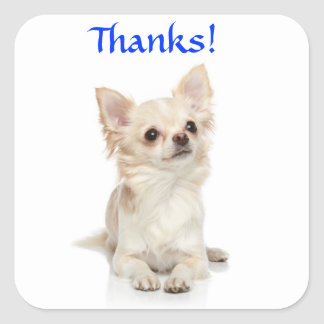 Thanks Long Haired Chihuahua  Sticker