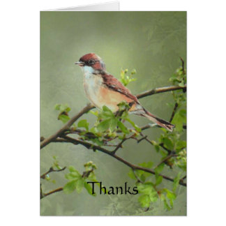 Thanks Whitethroat Bird for Gift, Donation Card