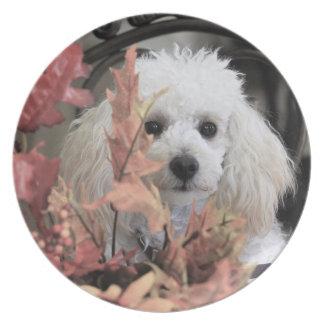 Thanksgiving Boxer Dog melamine plate