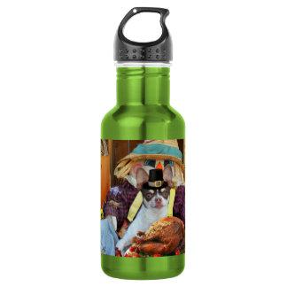 Thanksgiving chihuahua dog