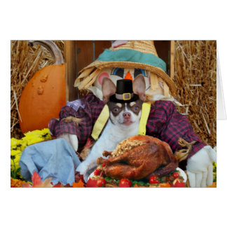 Thanksgiving Chihuahua dog greeting Card