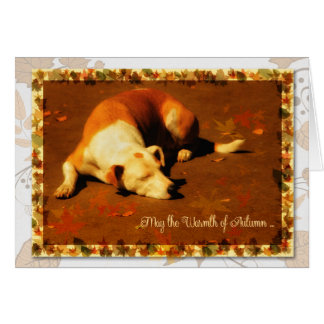 Thanksgiving | Dog in the Autumn Sun Greeting Card