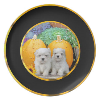 Thanksgiving Maltese puppies Plate