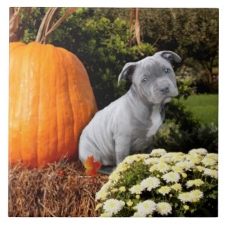 Thanksgiving Pitbull puppy Tile