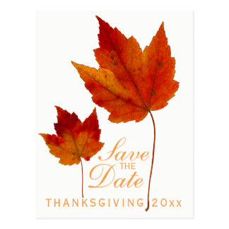 Thanksgiving Save the Date Maple Leaf Postcard