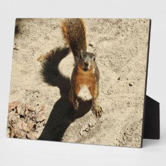 That Crazy Squirrel Plaque