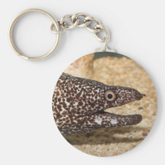 That's a Moray! Basic Round Button Keychain