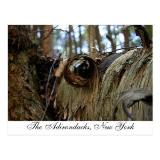 The Adirondacks, New York Postcard
