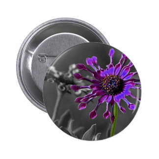 The African Daisy Buttons