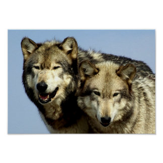The Alpha Wolf Couple Poster