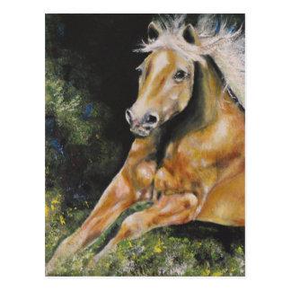 The American Mustang Postcard