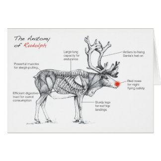 The Anatomy of Rudolph Card