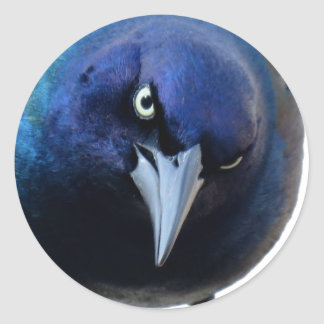 The Angry Grackle Classic Round Sticker
