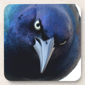 The Angry Grackle Coaster