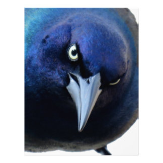 The Angry Grackle Letterhead