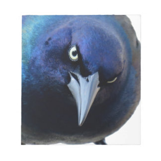 The Angry Grackle Notepad