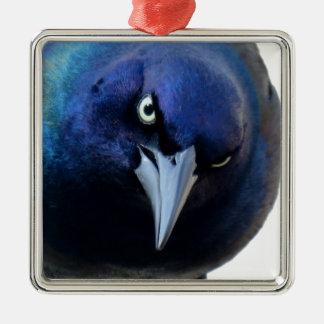 The Angry Grackle Silver-Colored Square Ornament