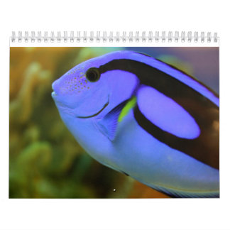 The Aquarium Wall Calendars