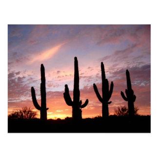 """The Arizona Show"" Postcard"