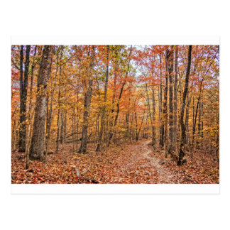 The Autumn Trail Postcard