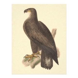 The Bald Eagle Haliaetos leucocephalus Flyers