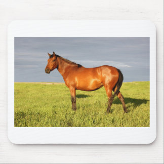 The Bay Mare Mouse Pad