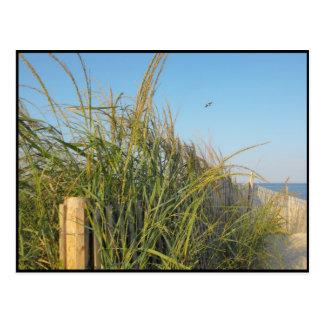 the Beach ~ 20 Postcard