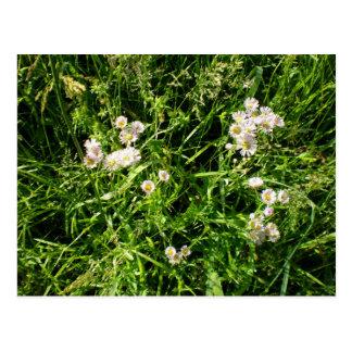 the beatiful flowers postcard