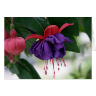 The Beauty of Fuchsia Card