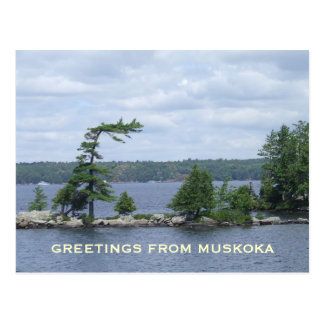 The Bent Tree, Muskoka, Ontario, Canada Postcard