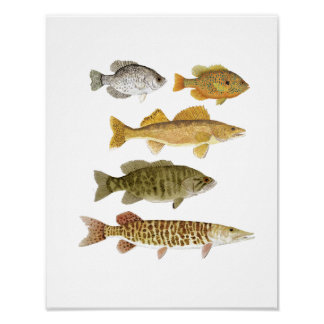 The Best Freshwater Gamefish Poster