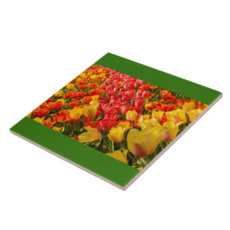 THE BLOSSOMING OF TULIPS  IN A PARK  CERAMIC TILE
