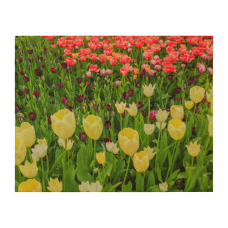 the blossoming of tulips in a park  WOOD WALL ART