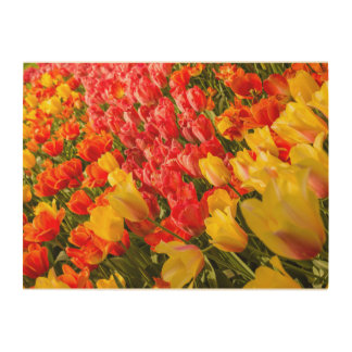 THE BLOSSOMING OF TULIPS  IN A PARK  WOOD WALL ART WOOD CANVASES