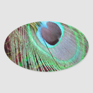 The Blue Eye peacock flowing feather. Oval Sticker