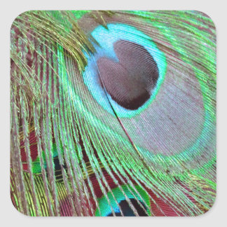 The Blue Eye peacock flowing feather. Square Sticker