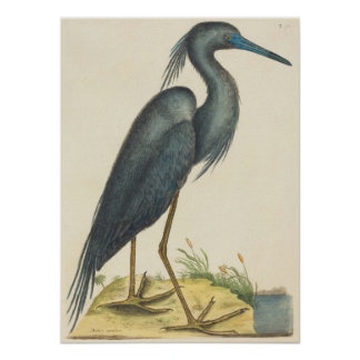 The Blue Heron Print by Mark Catesby