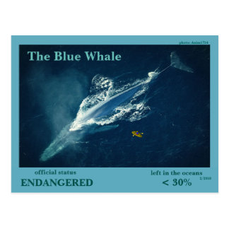 The Blue Whale is endangered  - Postcard