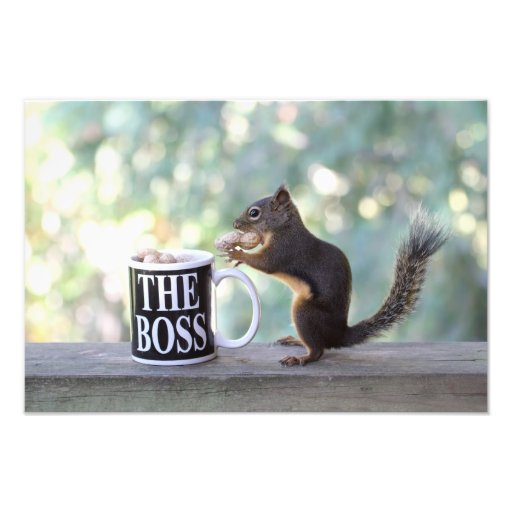 """The Boss"" Squirrel Photo Art"