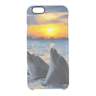 The bottle-nosed dolphins in sunset light clear iPhone 6/6S case