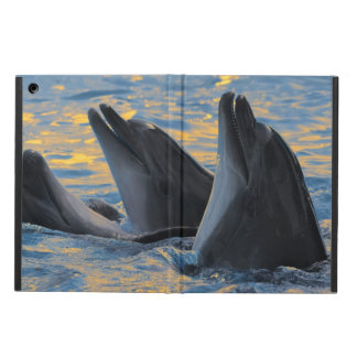 The bottle-nosed dolphins in sunset light cover for iPad air