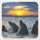The bottle-nosed dolphins in sunset light square paper coaster
