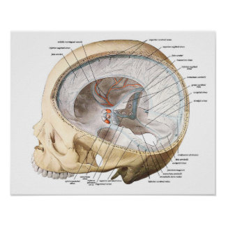 The Brain in the Skull Poster
